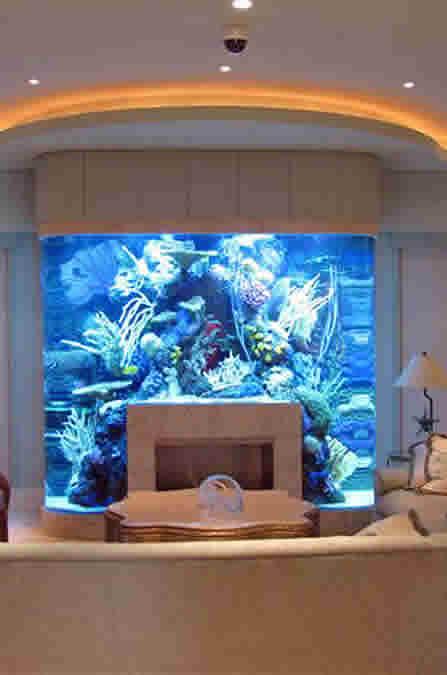 fish tank dating service